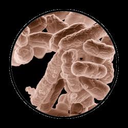 bakteri-pipa-dokterpipa
